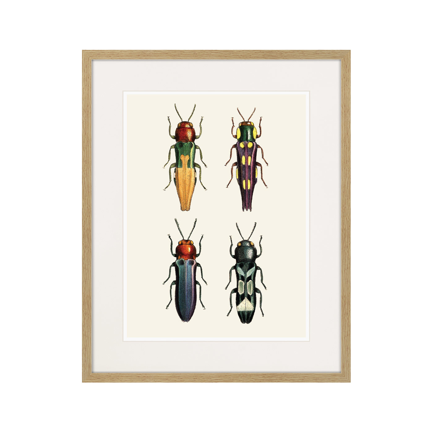 Assorted Beetles №5, 1735г.