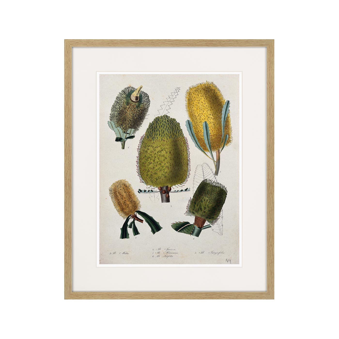 Exotic plants of the world №1, 1815г.