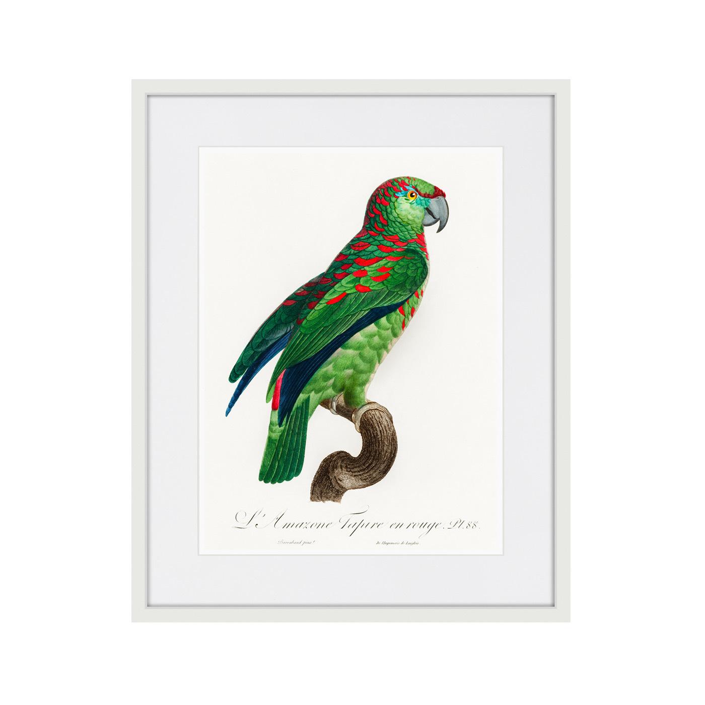 Beautiful parrots №4, 1872г.