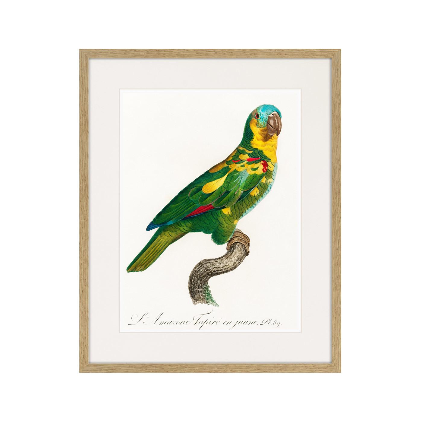 Beautiful parrots №11, 1872г.