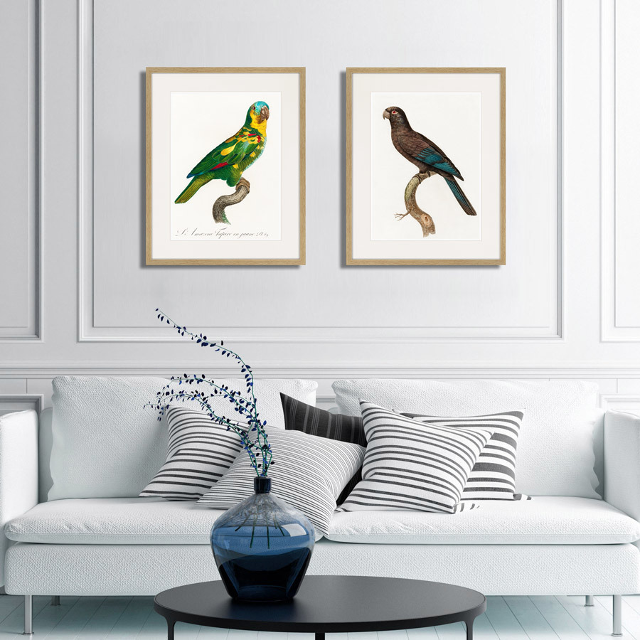 Beautiful parrots №12, 1872г.