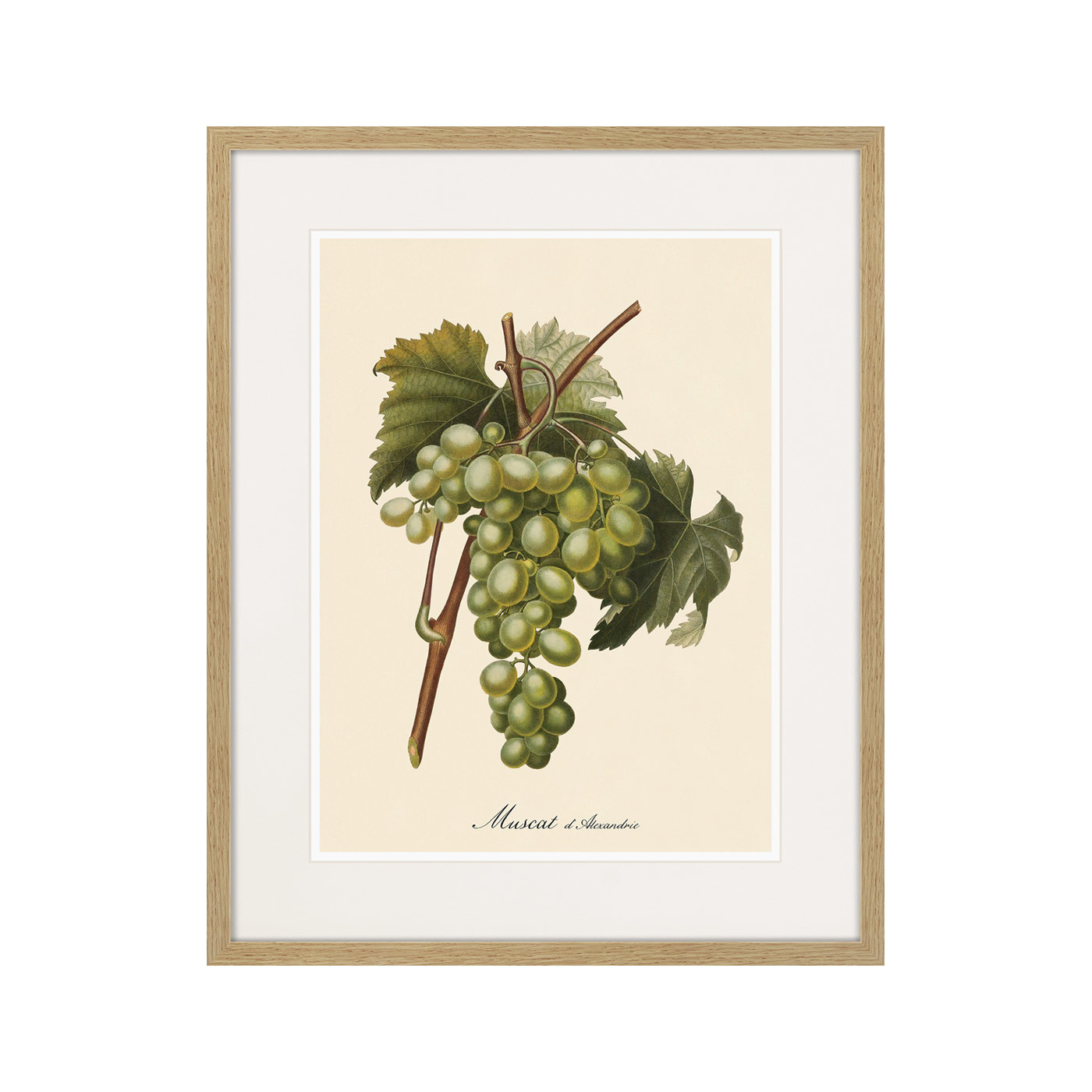 Juicy fruit lithography №13, 1870г.