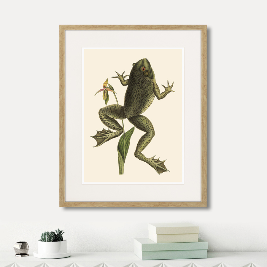 Big jumping frog, 1745г.
