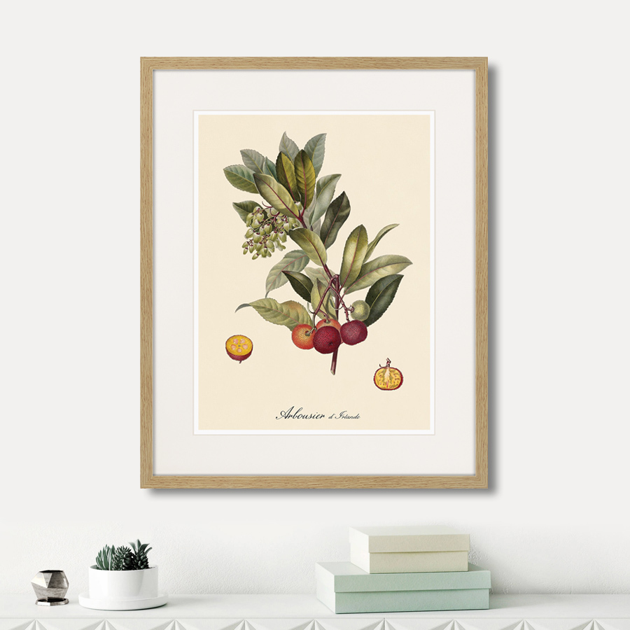 Juicy fruit lithography №4, 1870г.