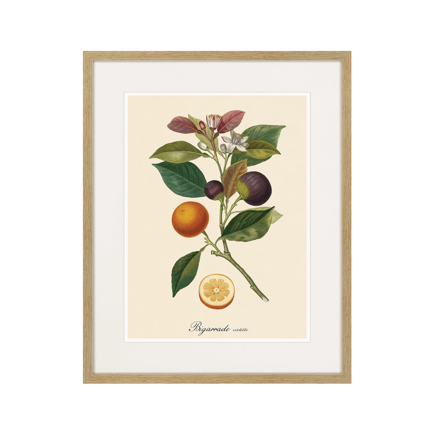 Juicy fruit lithography №11, 1870г.