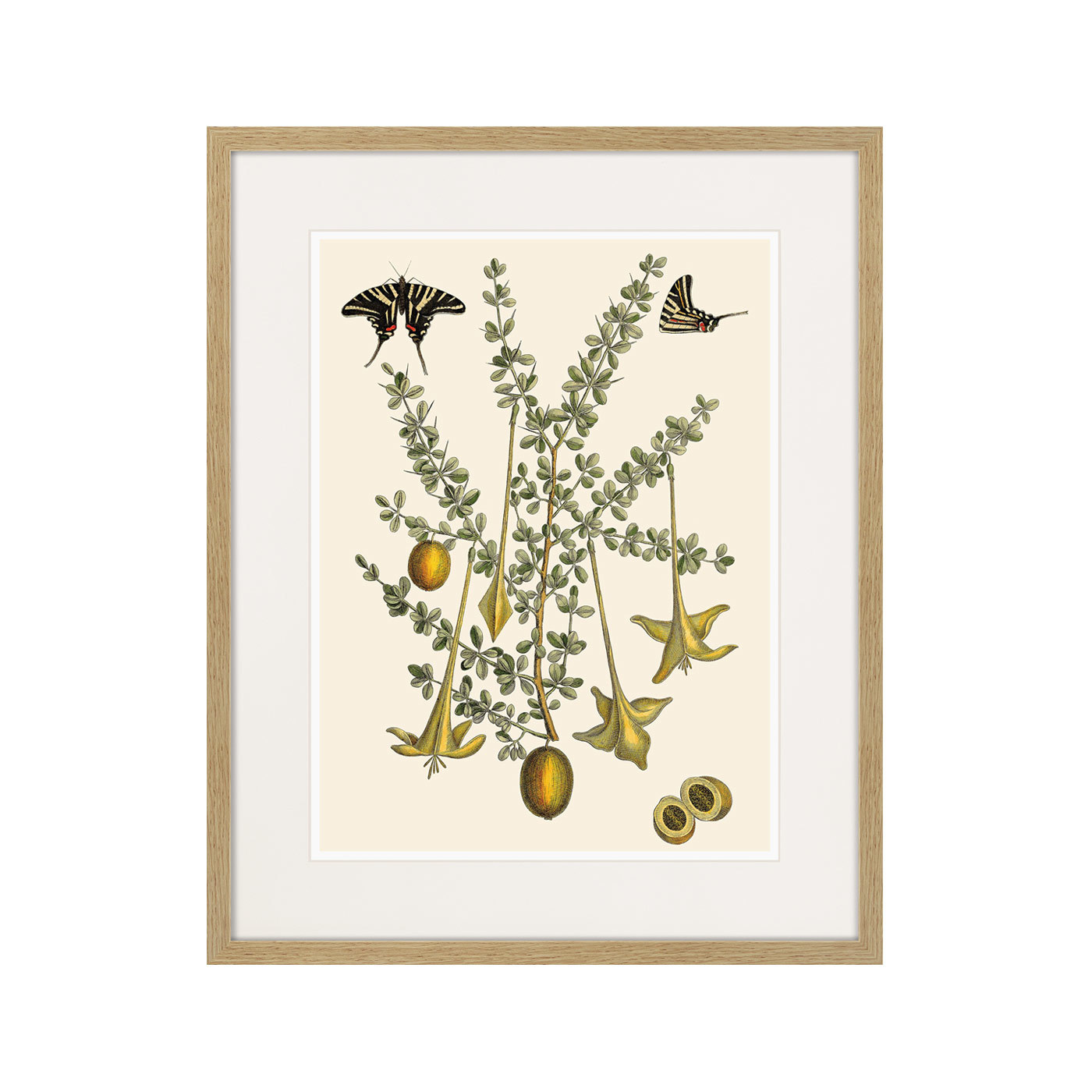 Juicy fruit lithography №1, 1870г.