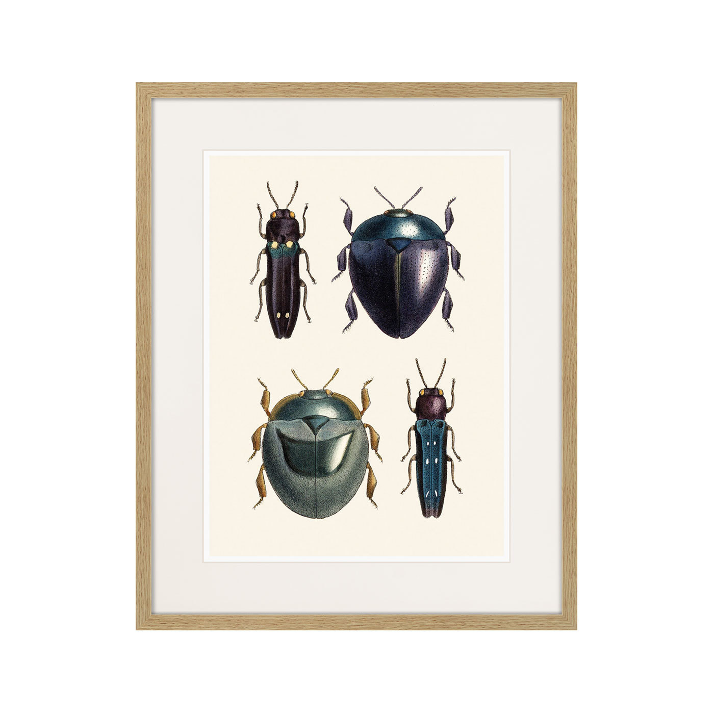 Assorted Beetles №1, 1735г.