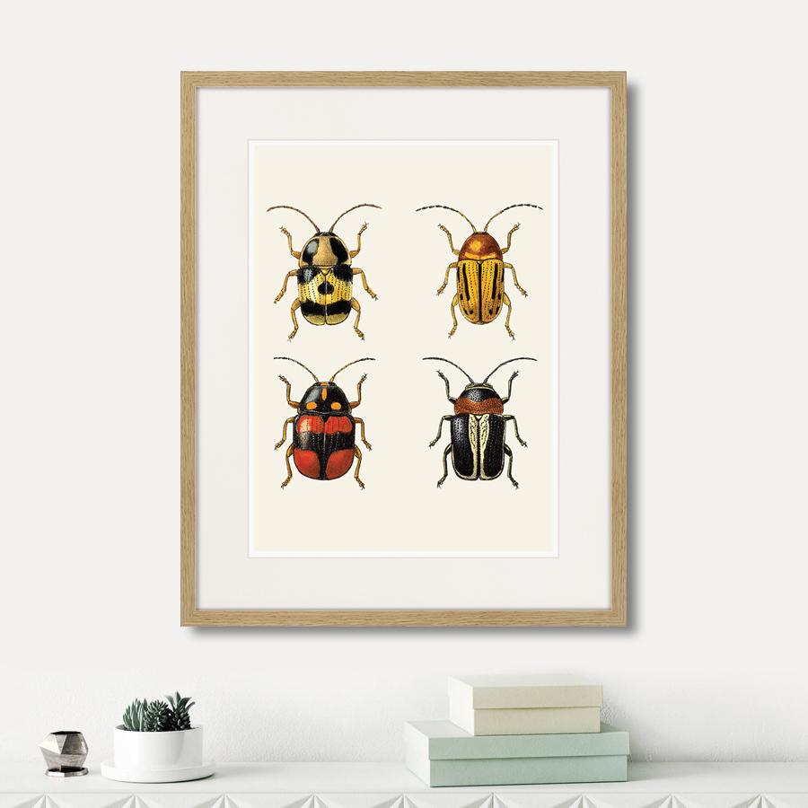 Assorted Beetles №6, 1735г.