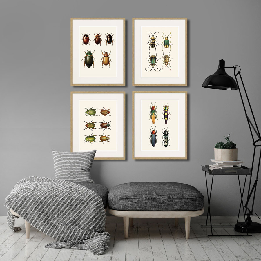 Assorted Beetles №7, 1735г.