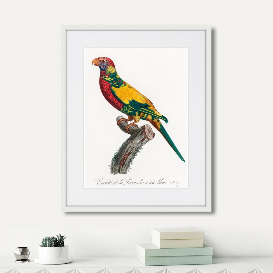 Beautiful parrots №7, 1872г.