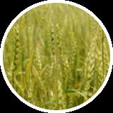 Выращивание и заготовка кормов