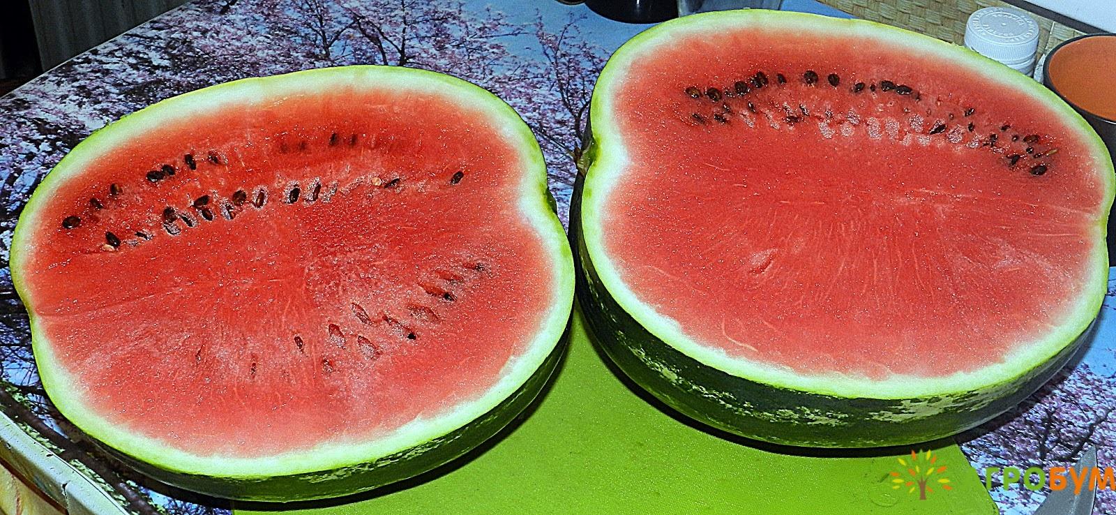 Купить семена Арбуз Скорик 1,0 г по низкой цене, доставка почтой наложенным платежом по России, курьером по Москве - интернет-магазин АгроБум