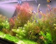 нужны ли нам аквариумные растения?