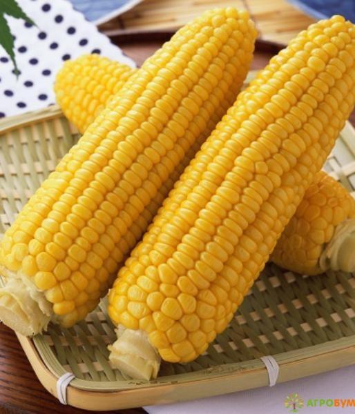 Купить семена Кукуруза Награда 97 5 г по низкой цене, доставка почтой наложенным платежом по России, курьером по Москве - интернет-магазин АгроБум
