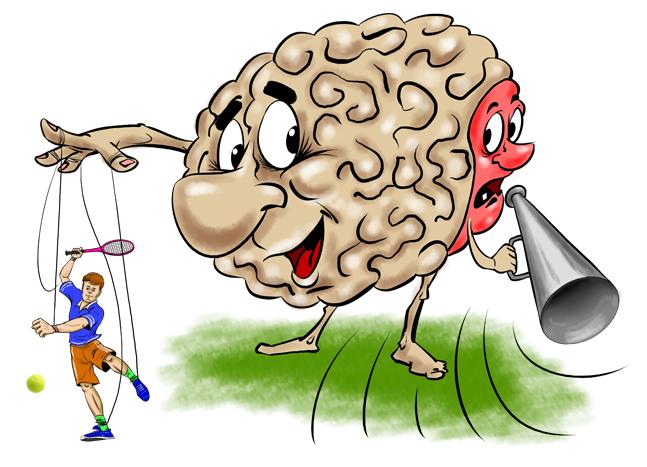 Мозжечок тренирует концентрацию внимания  и скорость реакции
