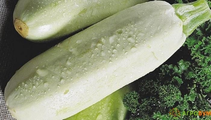 Купить семена Кабачок Ролик 2 г по низкой цене, доставка почтой наложенным платежом по России, курьером по Москве - интернет-магазин АгроБум