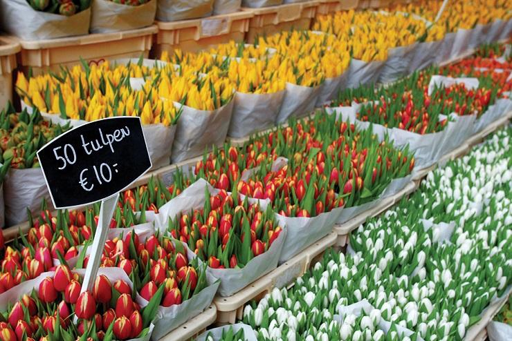 цены на тюльпаны