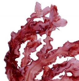 Красные водоросли Лифтинг-флюид для тела Just Юст 200 мл