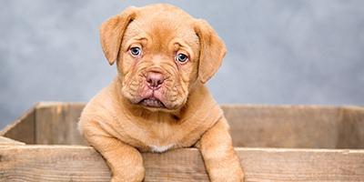 puppy_400x200.jpg