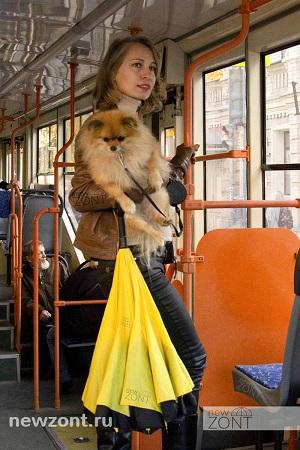Желтый зонт наоборот дама с собачкой