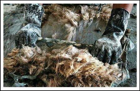 Сгонка шерсти со шкуры тупиком на колоде
