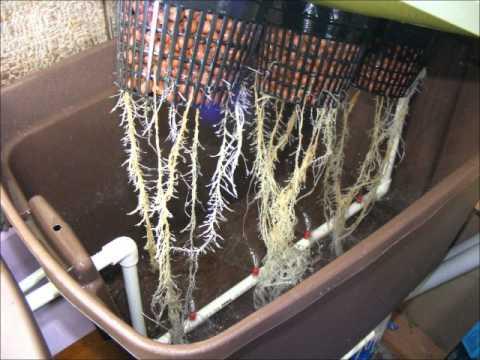 Гидропонные системы для выращивания марихуаны как следить за марихуаной