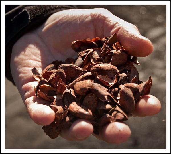 Какавелло - это шелуха какао-бобов