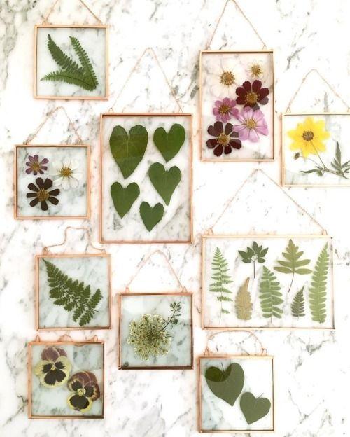рамки из сушеных растений и цветов