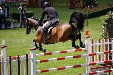конно-спортивные болезни