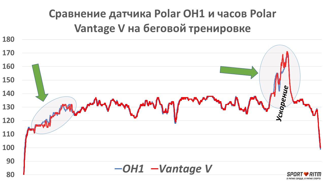 Сравнение графиков пульса Polar Vantage V и Polar OH1
