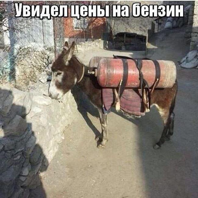 auto_prikoli_09.jpg