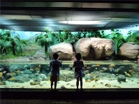 child-and-Aquarium_s.jpg