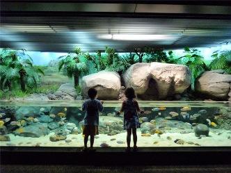 child-and-Aquarium.jpg