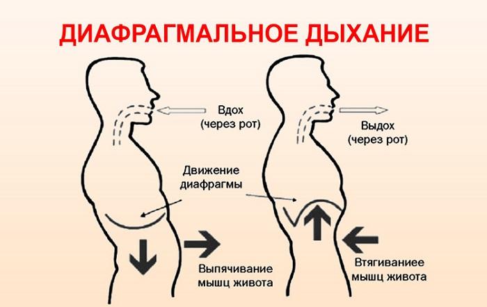 диафрагма дыхание