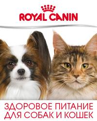 royal-promo.jpg