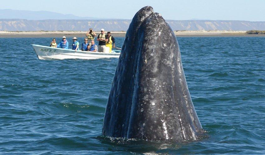 whale_mex.jpg