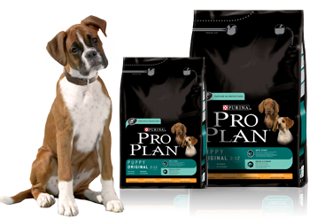 nutrition-puppy.png