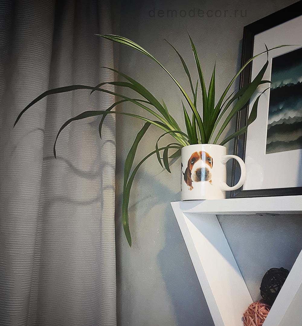 комнатное растение в кружке