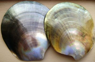 перламутровые створки моллюсков