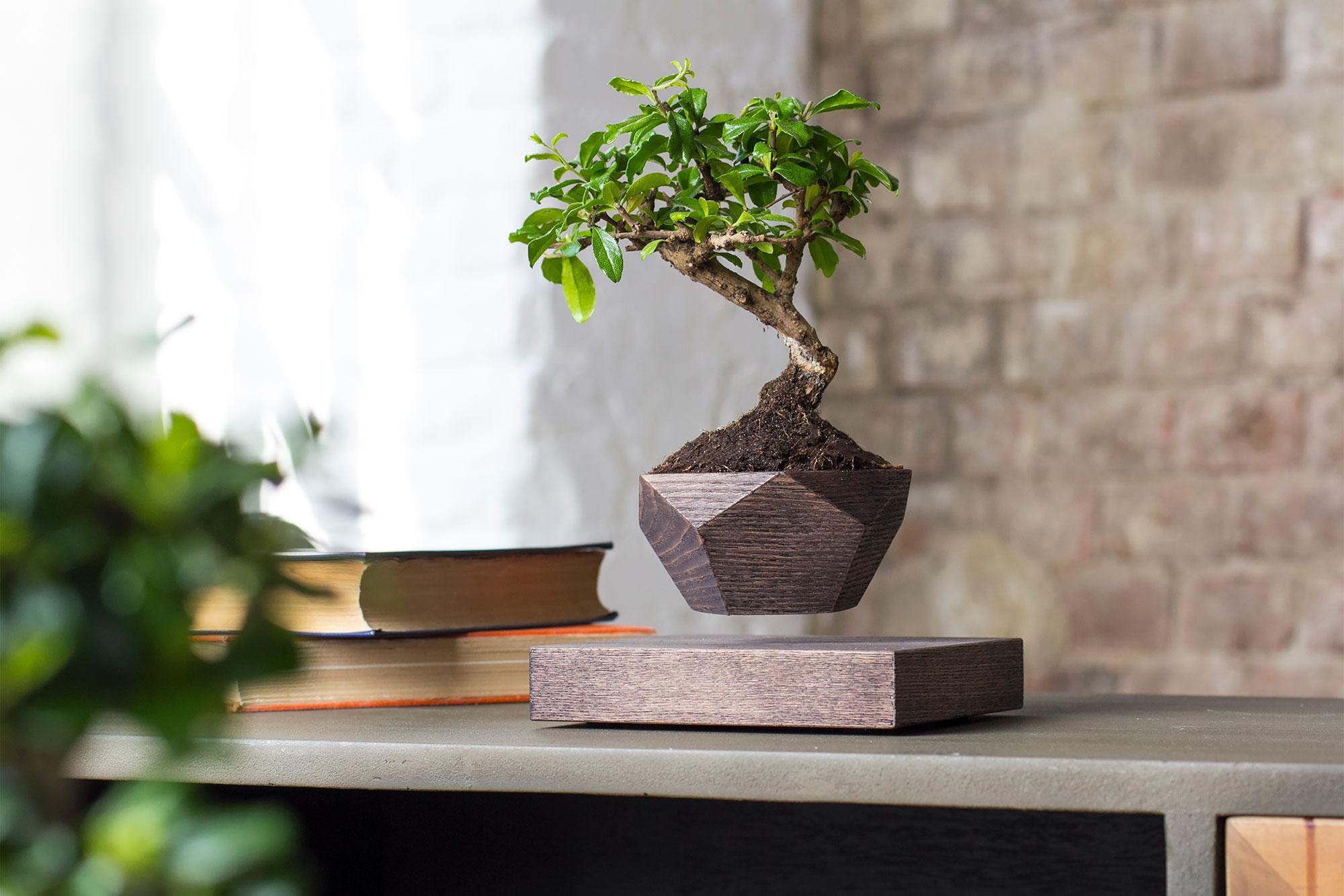 Левитирующие растения Leplant