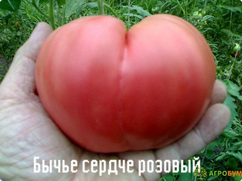 Купить семена Томат Бычье сердце розовое 0,1 г по низкой цене, доставка почтой наложенным платежом по России, курьером по Москве - интернет-магазин АгроБум