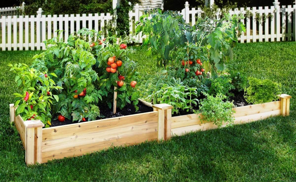 Овощные высокие грядки