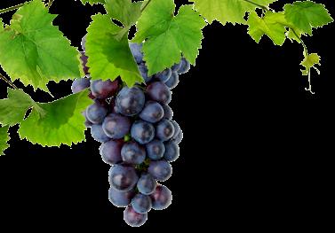 виноград2.jpg