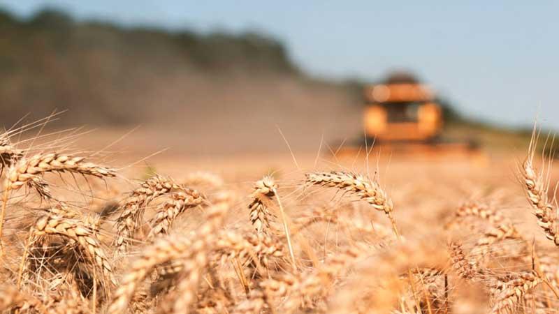 Absolut 100% пшеничная водка