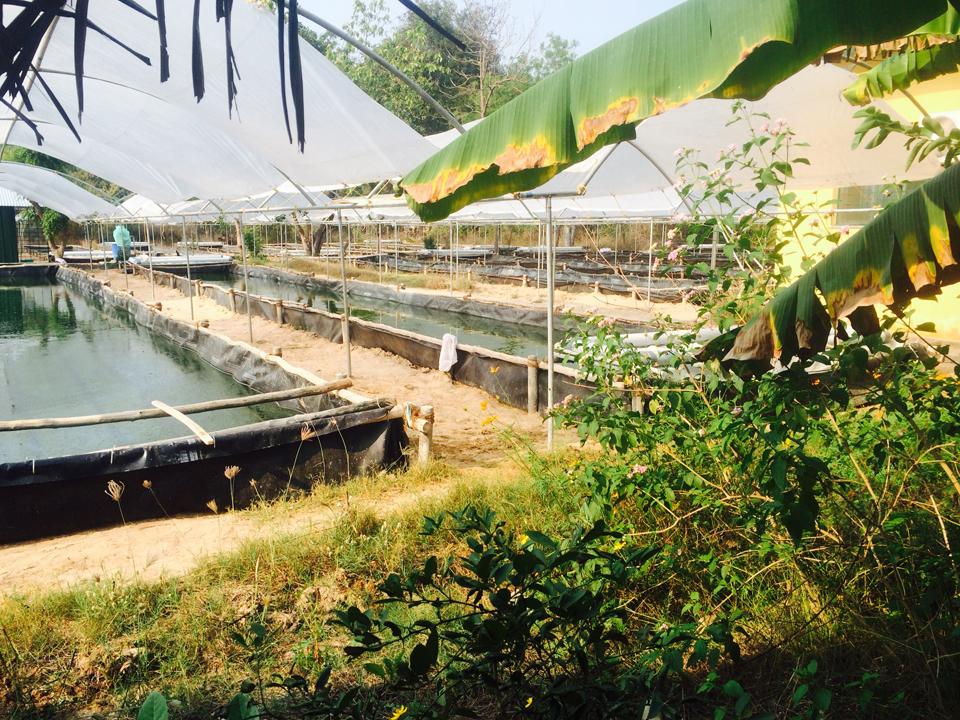 Ферма в Ауровиле, где выращивают спирулину