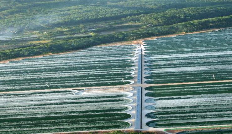 Выращивание спирулины