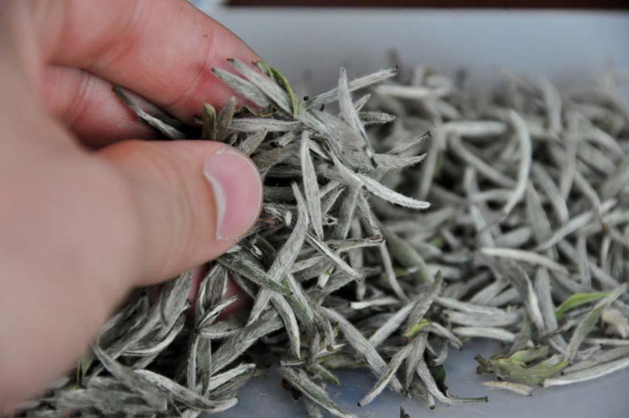 Байхао Иньчжэнь «серебряные иглы с белым ворсом»