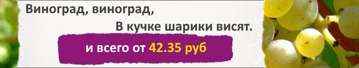 Купить Семена Винограда, цена низкая, доставка почтой наложенным платежом по России, курьером по Москве - интернет-магазин АгроБум