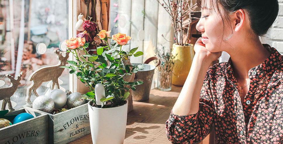 уникальный помощник Xiaomi Smart Flower Monitor