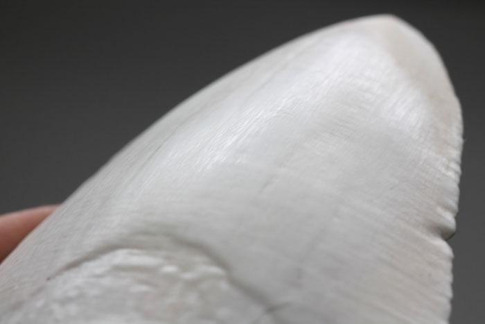 Акулий зуб распечатан на 3D-принтере, сглажен, обработан